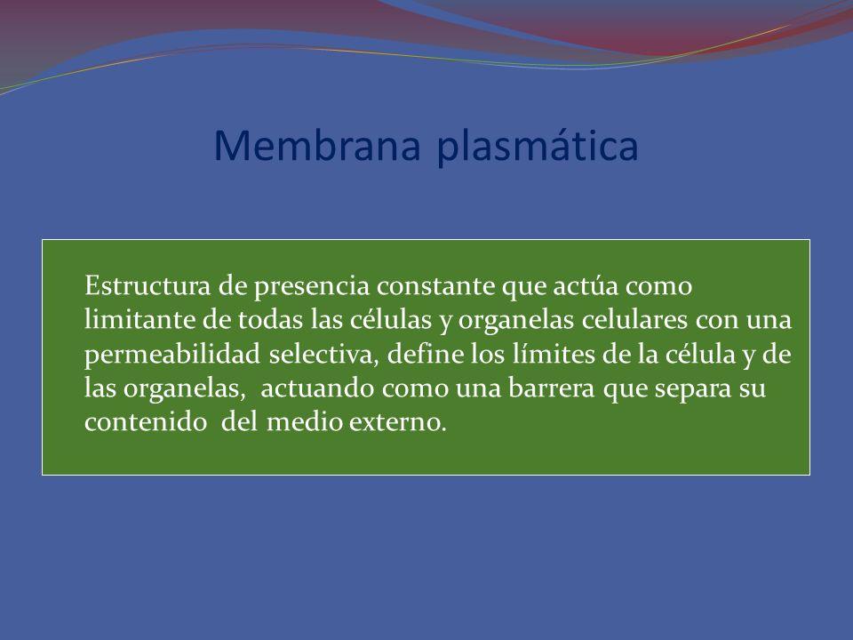 Membrana plasmática Estructura de presencia constante que actúa como limitante de todas las células y organelas celulares con una permeabilidad select