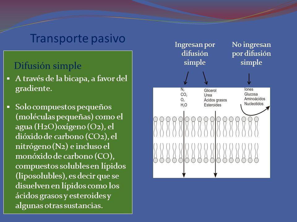 Transporte pasivo Difusión simple A través de la bicapa, a favor del gradiente. Solo compuestos pequeños (moléculas pequeñas) como el agua (H2O)oxígen