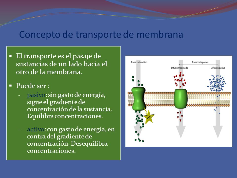 Concepto de transporte de membrana El transporte es el pasaje de sustancias de un lado hacia el otro de la membrana. Puede ser : - pasivo: sin gasto d
