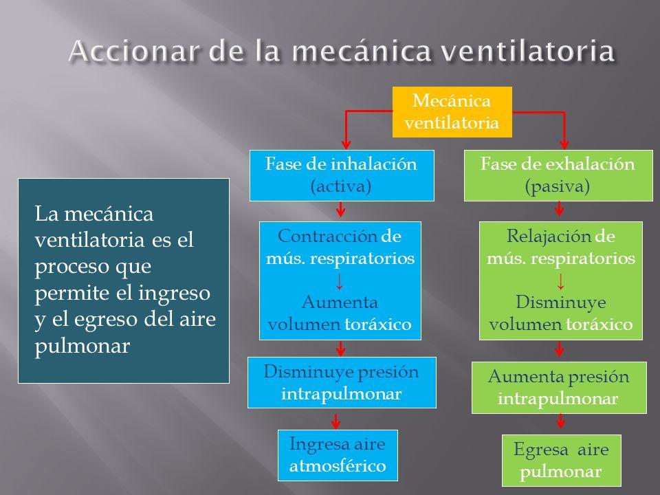La mecánica ventilatoria es el proceso que permite el ingreso y el egreso del aire pulmonar Mecánica ventilatoria Fase de inhalación (activa) Aumenta