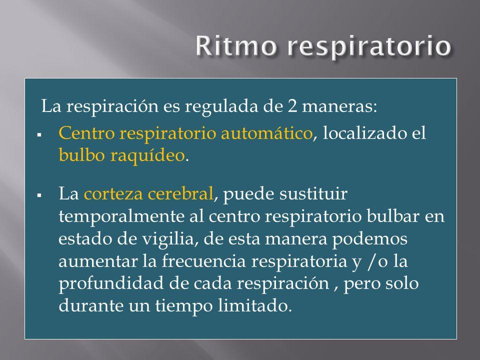La respiración es regulada de 2 maneras: Centro respiratorio automático, localizado el bulbo raquídeo. La corteza cerebral, puede sustituir temporalme