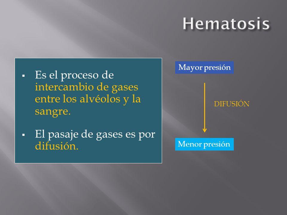 Es el proceso de intercambio de gases entre los alvéolos y la sangre. El pasaje de gases es por difusión. Mayor presión Menor presión DIFUSIÓN