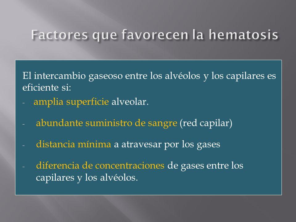 El intercambio gaseoso entre los alvéolos y los capilares es eficiente si: - amplia superficie alveolar. - abundante suministro de sangre (red capilar