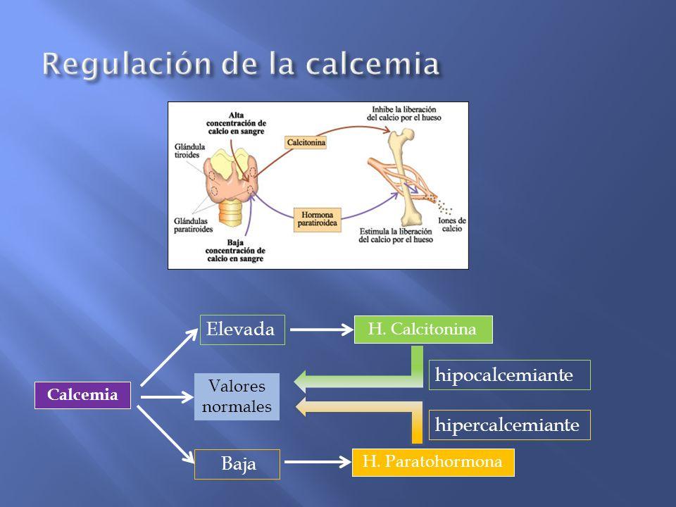 H. Paratohormona Calcemia H. Calcitonina Baja Elevada Valores normales hipocalcemiante hipercalcemiante