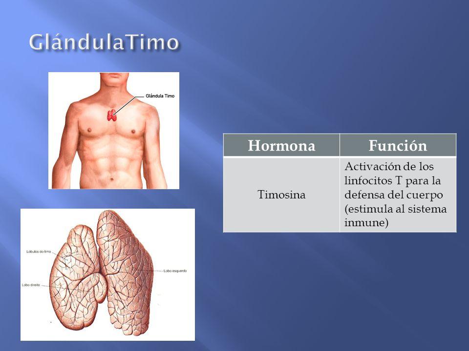 HormonaFunción Timosina Activación de los linfocitos T para la defensa del cuerpo (estimula al sistema inmune)