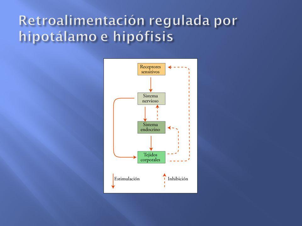 HormonaFunción Testosterona Iniciar y mantener los caracteres sexuales secundarios masculinos (su presencia en el feto es fundamental para que éste sea masculino o femenino), interviene en la maduración de los espermatozoides.