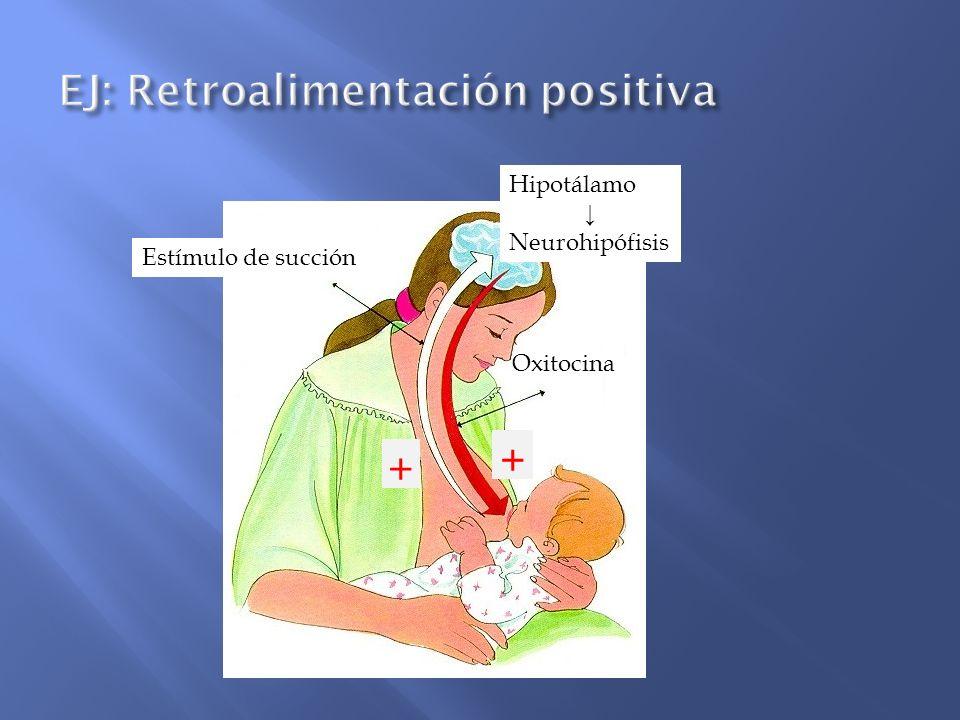Hormona Función Melatonina actúa como un reloj biológico regulando y coordinando las funciones orgánicas con relación a los ciclos de luz- oscuridad del ambiente.