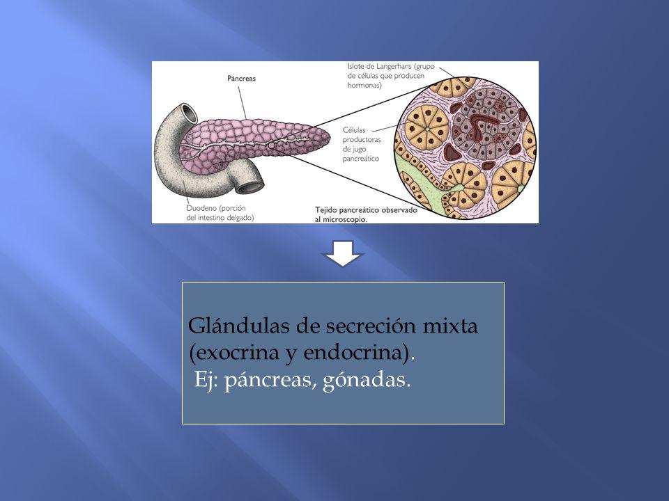 Glándulas de secreción mixta (exocrina y endocrina). Ej: páncreas, gónadas.