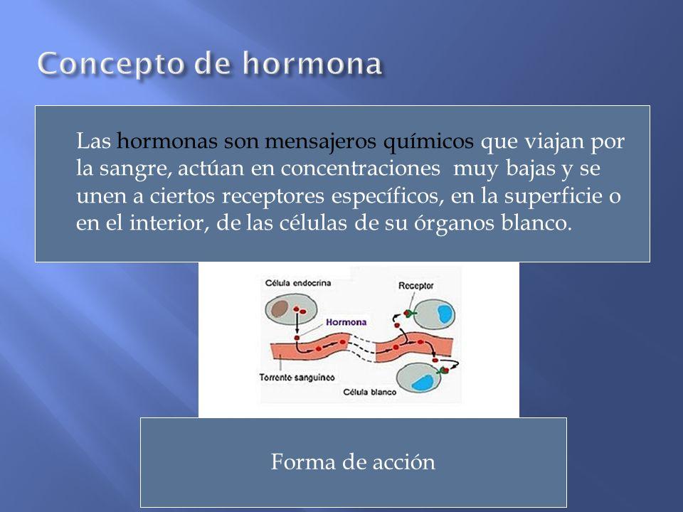 Las hormonas son mensajeros químicos que viajan por la sangre, actúan en concentraciones muy bajas y se unen a ciertos receptores específicos, en la s