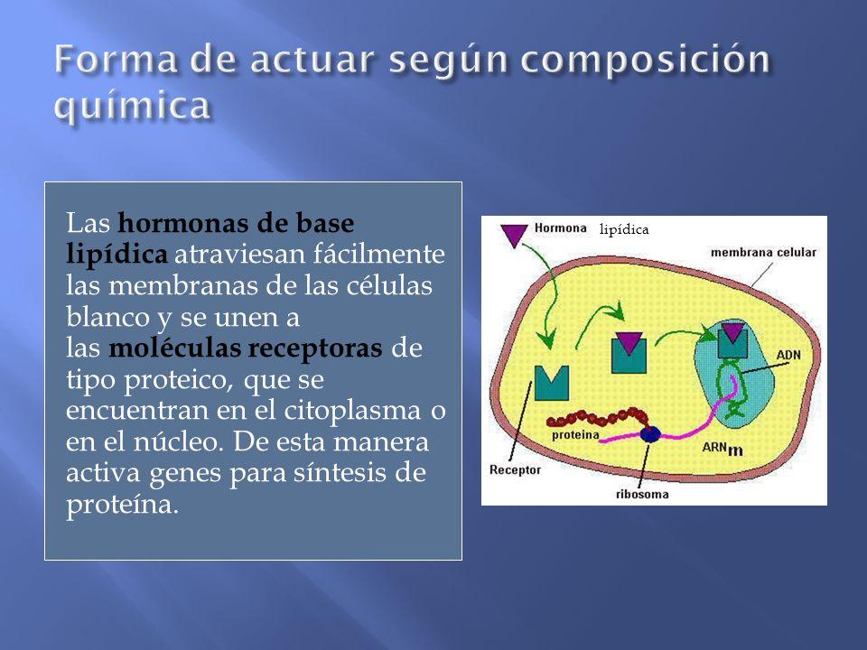 Las hormonas de base lipídica atraviesan fácilmente las membranas de las células blanco y se unen a las moléculas receptoras de tipo proteico, que se