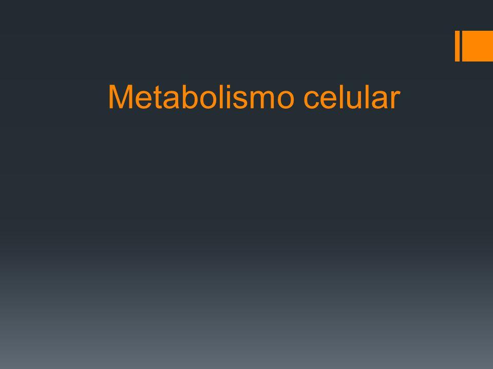 Vías anabólicas El anabolismo es el responsable de : La formación de los componentes celulares y tejidos corporales y por tanto del crecimiento.