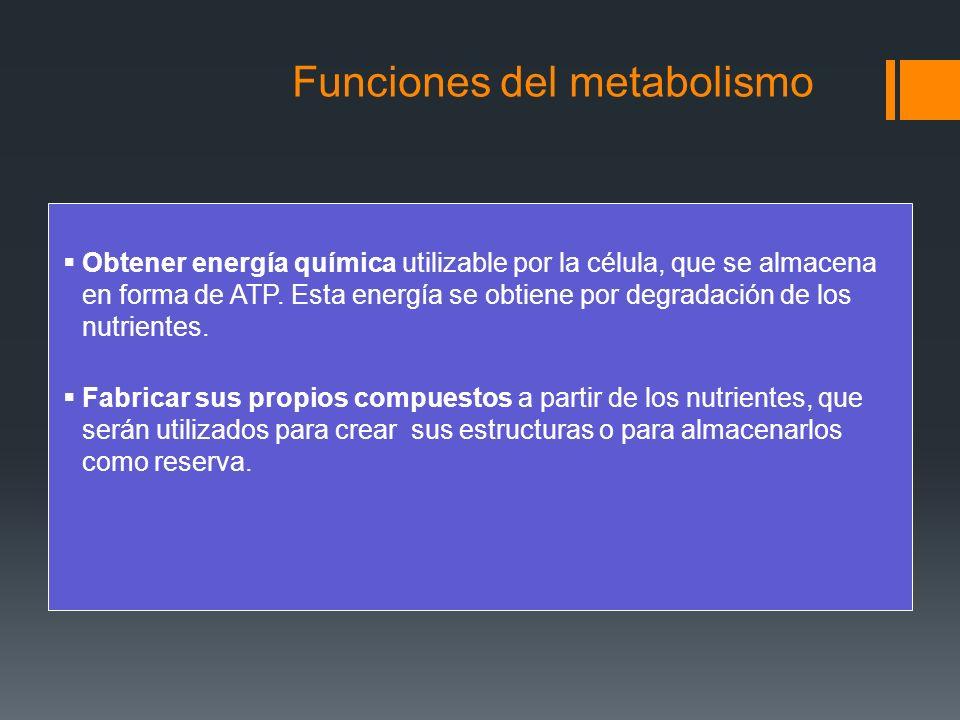 Vías catabólicas: El catabolismo comprende La degradación de moléculas orgánicas, cuya finalidad es la obtención de energía.