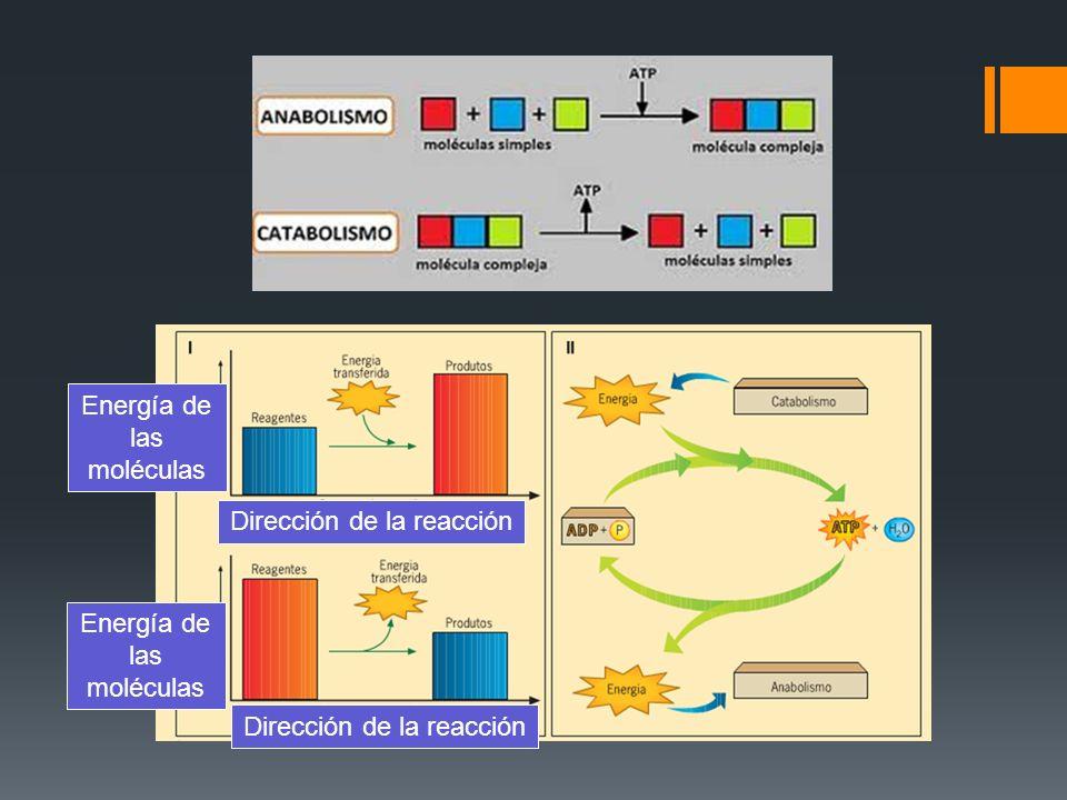 Procesos complementarios Biomoléculas complejas Biomoléculas simples
