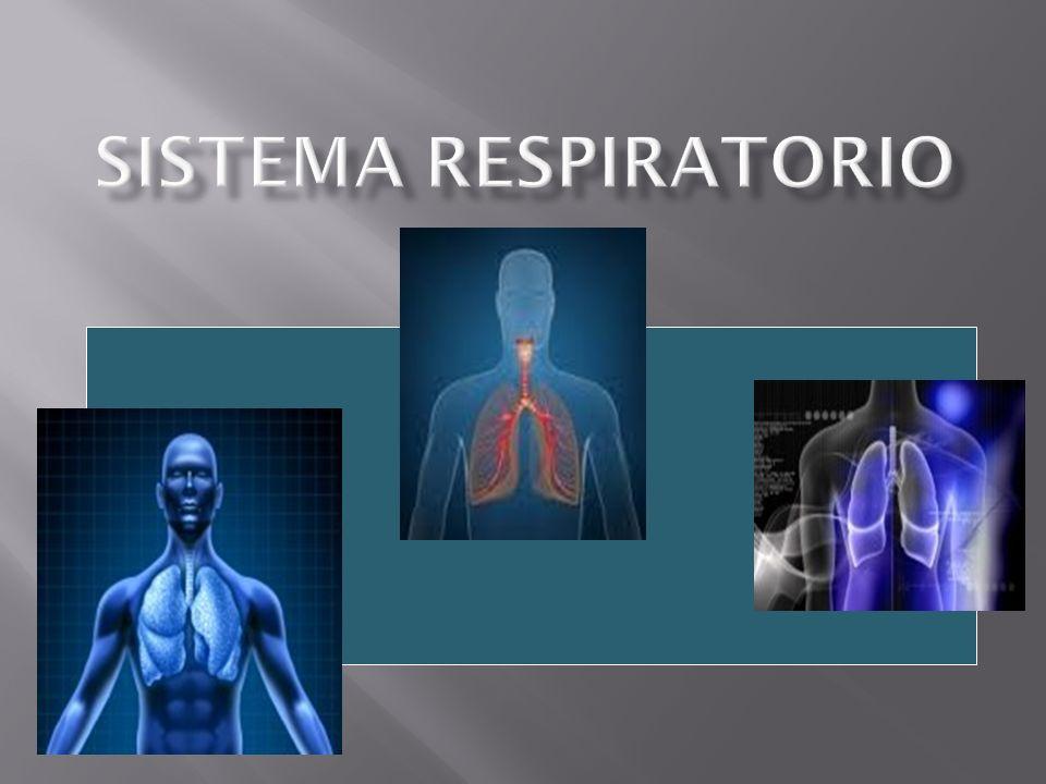 El término respiración se utiliza para indicar dos procesos diferentes: - Respiración externa: respiración pulmonar, proceso físico de ventilación pulmonar (inhalación y exhalación).