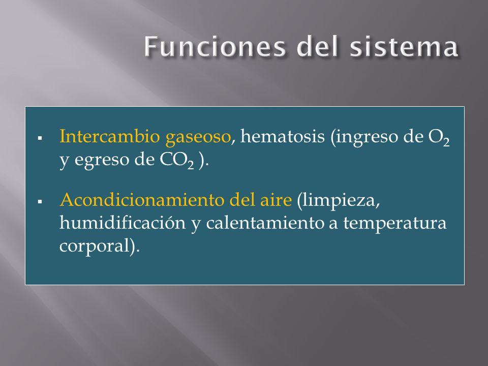 Intercambio gaseoso, hematosis (ingreso de O 2 y egreso de CO 2 ). Acondicionamiento del aire (limpieza, humidificación y calentamiento a temperatura