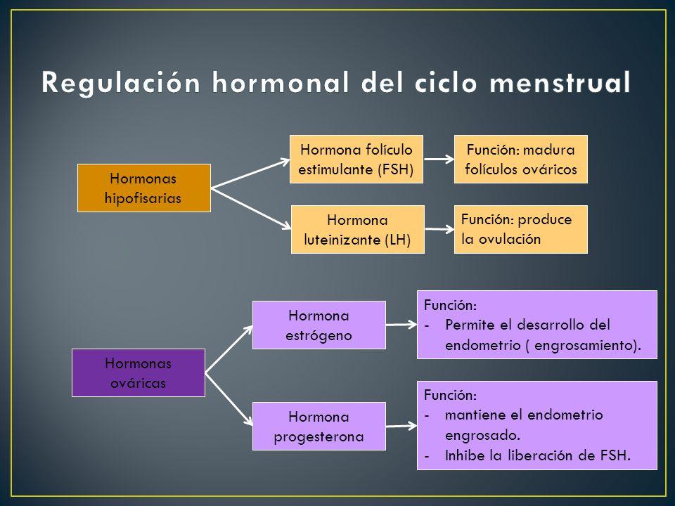 Hormonas ováricas Hormona folículo estimulante (FSH) Hormonas hipofisarias Hormona luteinizante (LH) Hormona progesterona Hormona estrógeno Función: p