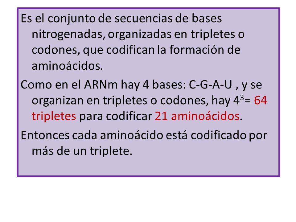 Es el conjunto de secuencias de bases nitrogenadas, organizadas en tripletes o codones, que codifican la formación de aminoácidos. Como en el ARNm hay