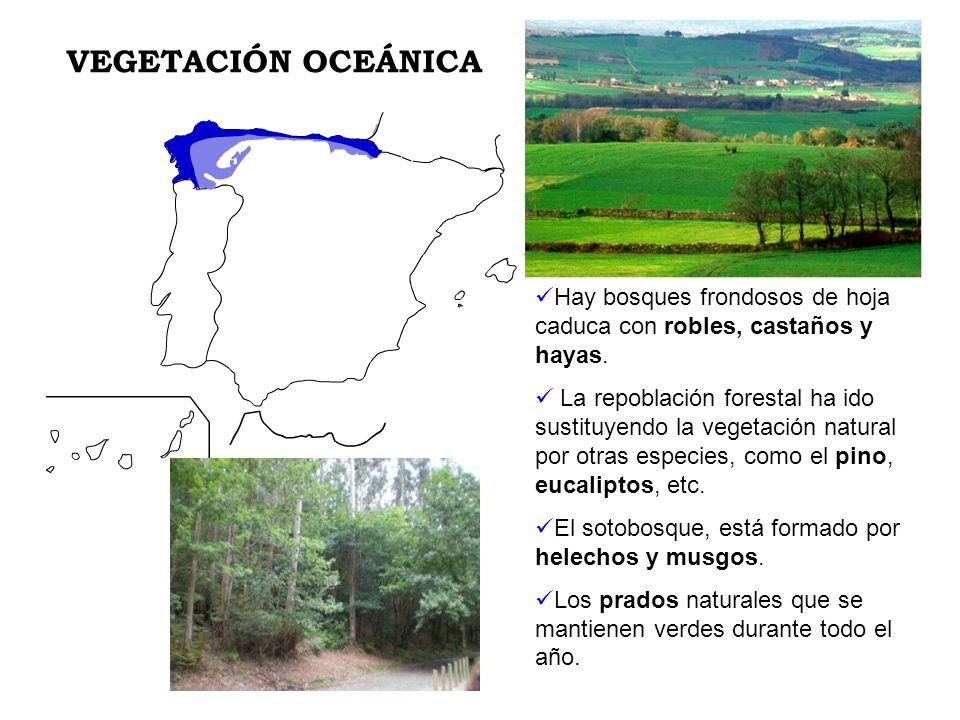 Hay bosques frondosos de hoja caduca con robles, castaños y hayas. La repoblación forestal ha ido sustituyendo la vegetación natural por otras especie