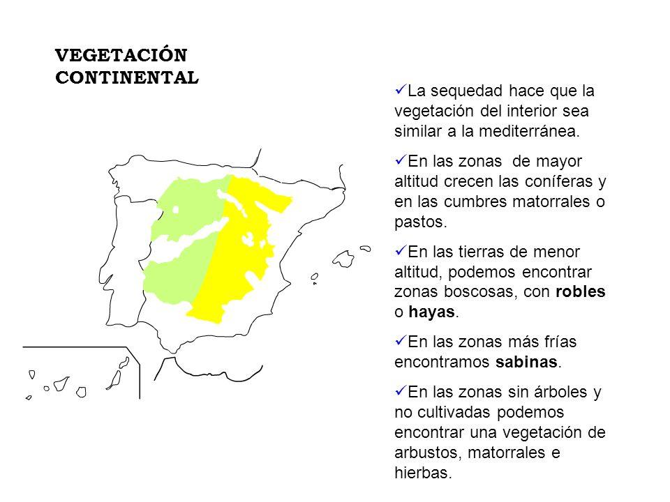 La sequedad hace que la vegetación del interior sea similar a la mediterránea. En las zonas de mayor altitud crecen las coníferas y en las cumbres mat
