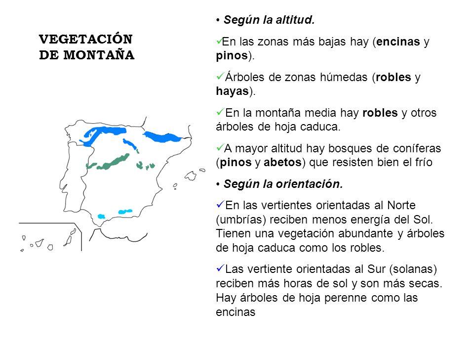 Según la altitud. En las zonas más bajas hay (encinas y pinos). Árboles de zonas húmedas (robles y hayas). En la montaña media hay robles y otros árbo