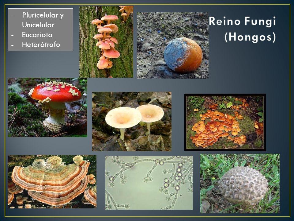 -Pluricelular y Unicelular -Eucariota -Heterótrofo