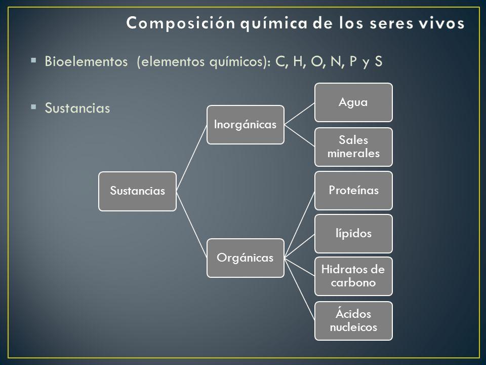 Bioelementos (elementos químicos): C, H, O, N, P y S Sustancias InorgánicasAgua Sales minerales OrgánicasProteínaslípidos Hidratos de carbono Ácidos n
