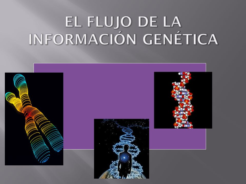 Todos los organismos contienen información que les permite coordinar sus procesos.