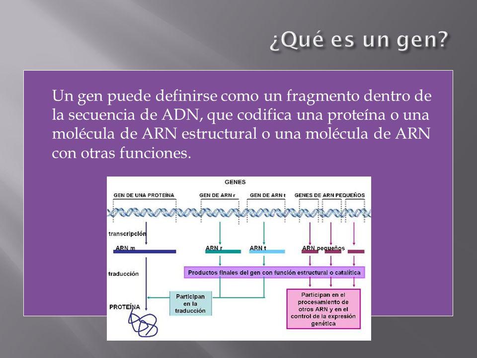 Un gen puede definirse como un fragmento dentro de la secuencia de ADN, que codifica una proteína o una molécula de ARN estructural o una molécula de