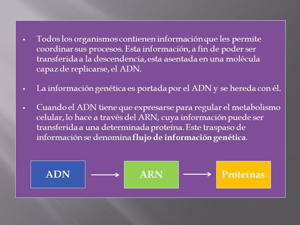 Todos los organismos contienen información que les permite coordinar sus procesos. Esta información, a fin de poder ser transferida a la descendencia,