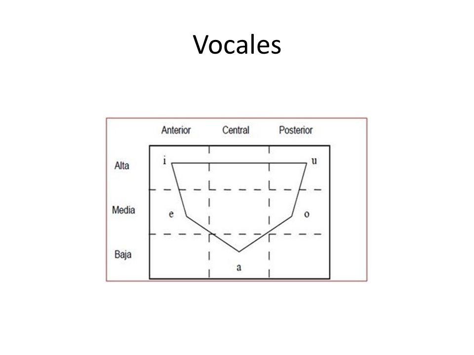 Otros rasgos Las vocales posteriores son siempre redondeadas.