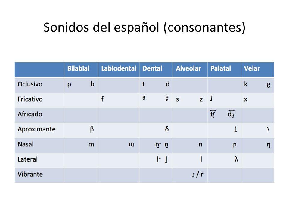 Sonidos del español (consonantes)