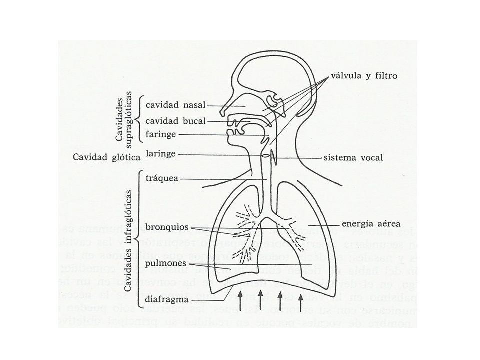 FONACIÓN Proceso de producción de una onda sonora (voz) mediante la acción de una fuente de sonido.