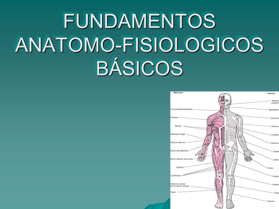 FUNDAMENTOS ANATOMO-FISIOLOGICOS BÁSICOS