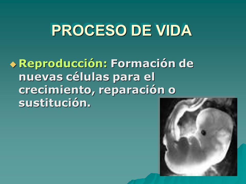 PROCESO DE VIDA Reproducción: Formación de nuevas células para el crecimiento, reparación o sustitución. Reproducción: Formación de nuevas células par