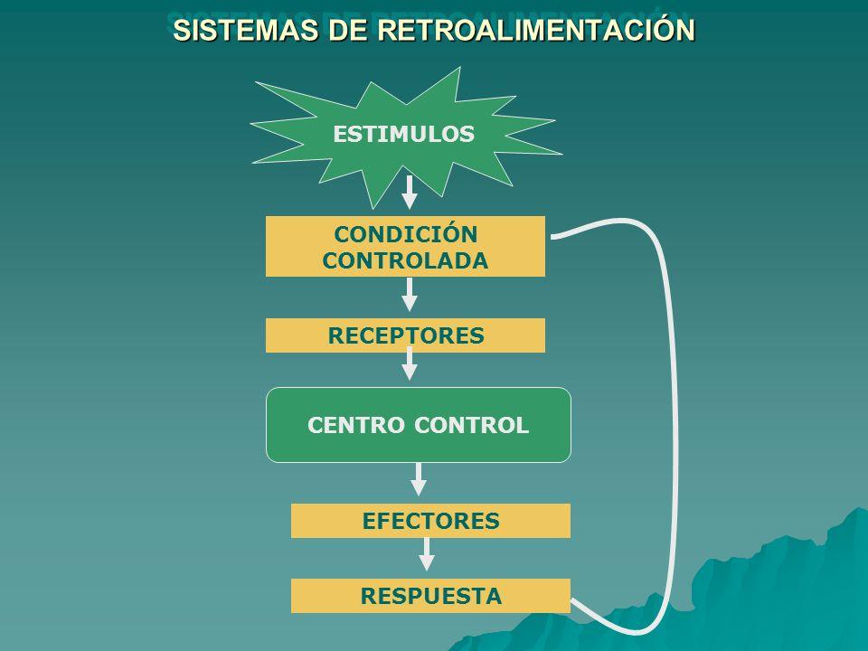 SISTEMAS DE RETROALIMENTACIÓN ESTIMULOS CONDICIÓN CONTROLADA RECEPTORES CENTRO CONTROL EFECTORES RESPUESTA