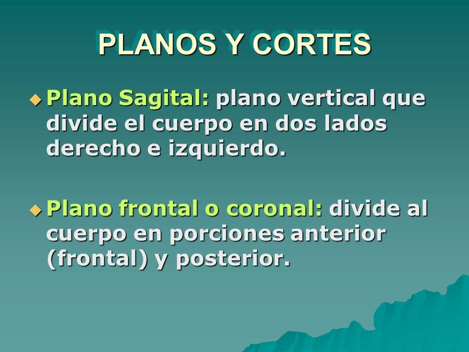 PLANOS Y CORTES Plano Sagital: plano vertical que divide el cuerpo en dos lados derecho e izquierdo. Plano Sagital: plano vertical que divide el cuerp