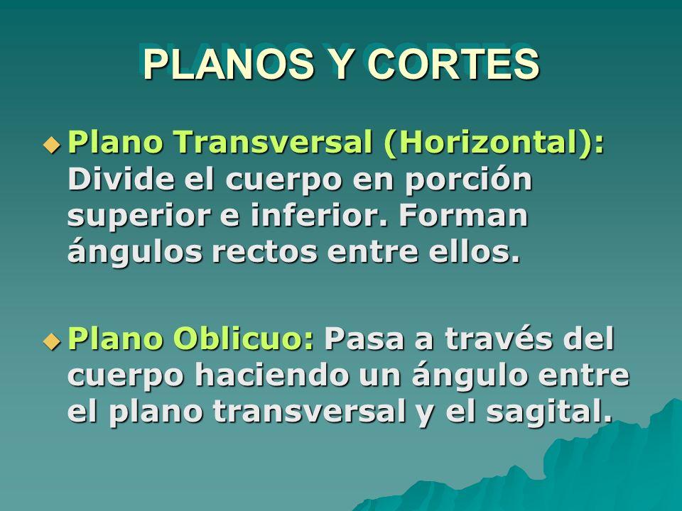 PLANOS Y CORTES Plano Transversal (Horizontal): Divide el cuerpo en porción superior e inferior. Forman ángulos rectos entre ellos. Plano Transversal