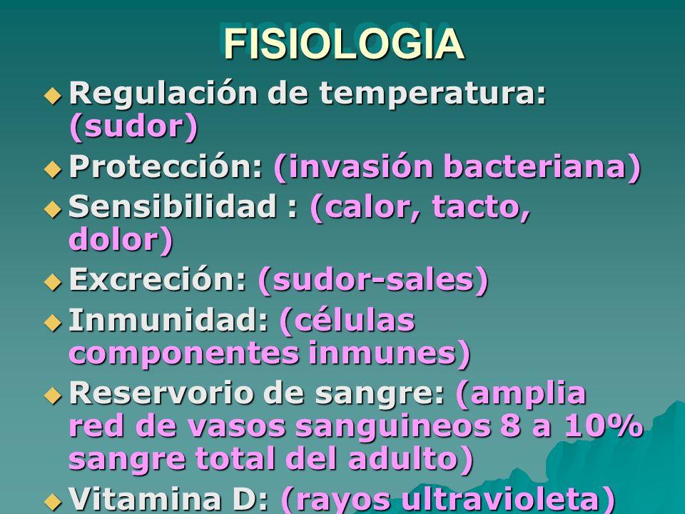 FISIOLOGIAFISIOLOGIA Regulación de temperatura: (sudor) Regulación de temperatura: (sudor) Protección: (invasión bacteriana) Protección: (invasión bac