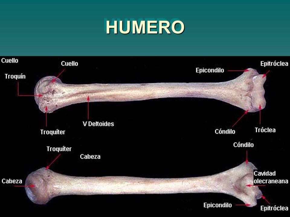HUMEROHUMERO