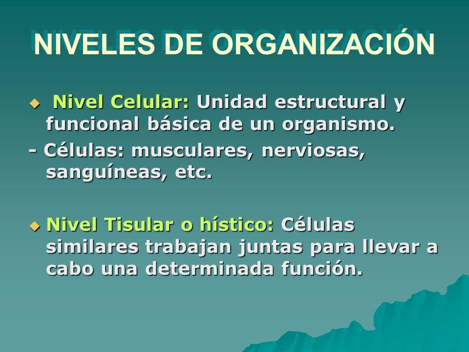 Nivel Celular: Unidad estructural y funcional básica de un organismo. Nivel Celular: Unidad estructural y funcional básica de un organismo. - Células: