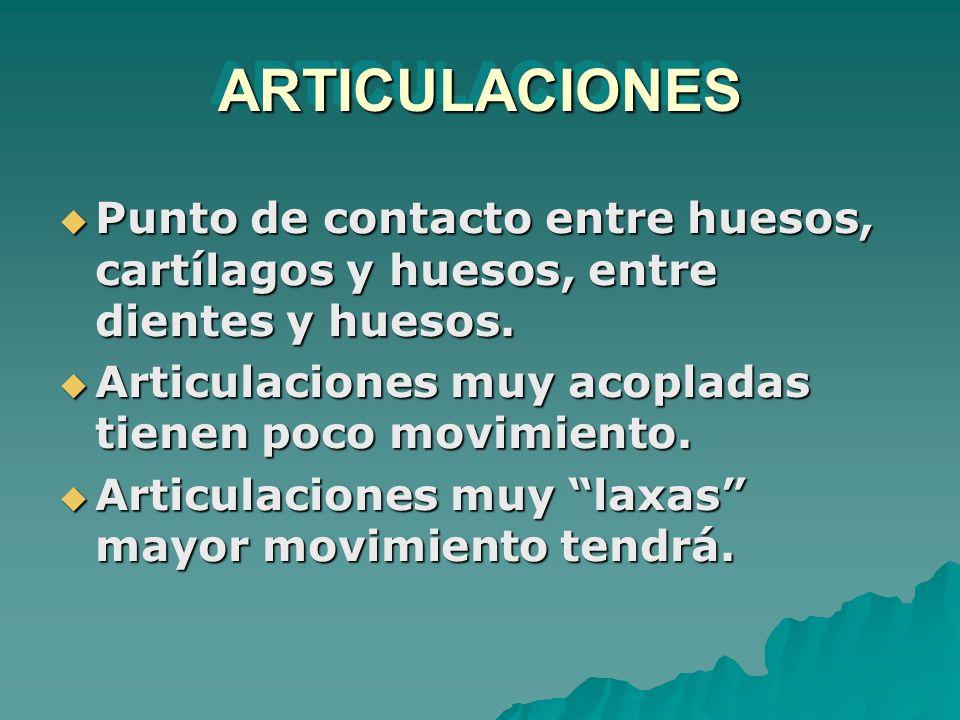 ARTICULACIONESARTICULACIONES Punto de contacto entre huesos, cartílagos y huesos, entre dientes y huesos. Punto de contacto entre huesos, cartílagos y