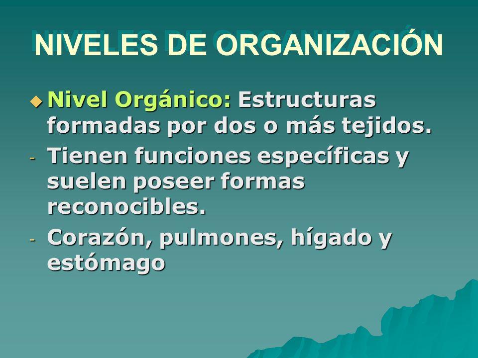 NIVELES DE ORGANIZACIÓN Nivel Orgánico: Estructuras formadas por dos o más tejidos. Nivel Orgánico: Estructuras formadas por dos o más tejidos. - Tien