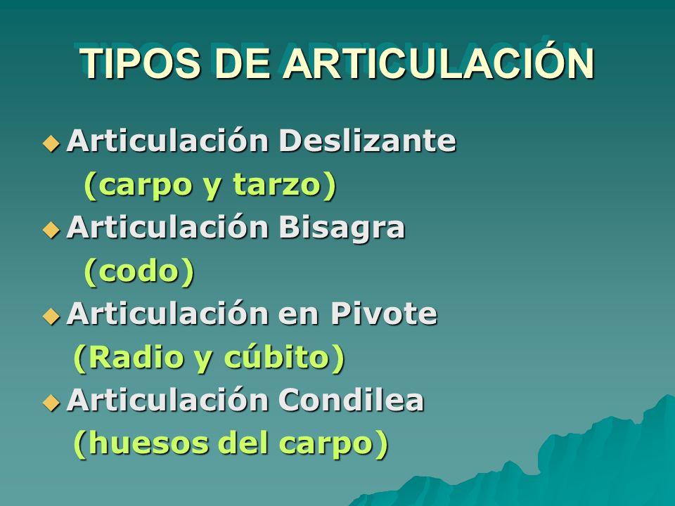 TIPOS DE ARTICULACIÓN Articulación Deslizante Articulación Deslizante (carpo y tarzo) (carpo y tarzo) Articulación Bisagra Articulación Bisagra (codo)