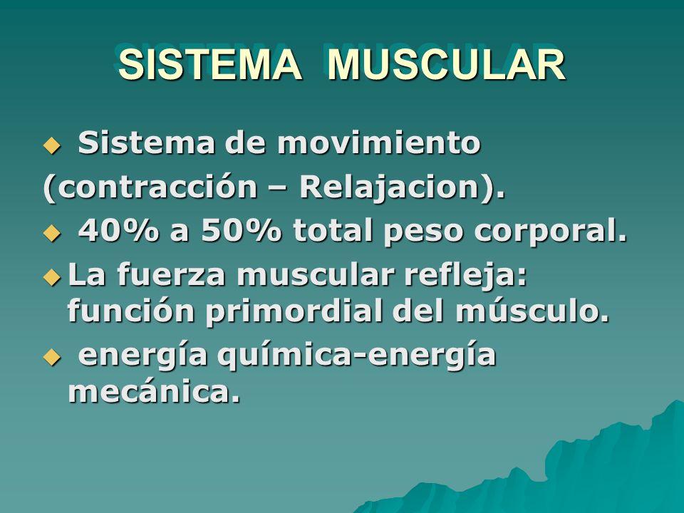 SISTEMA MUSCULAR Sistema de movimiento Sistema de movimiento (contracción – Relajacion). 40% a 50% total peso corporal. 40% a 50% total peso corporal.