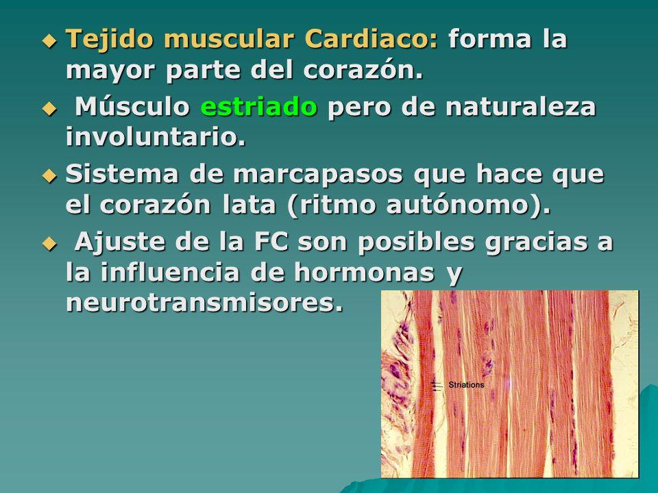 Tejido muscular Cardiaco: forma la mayor parte del corazón. Tejido muscular Cardiaco: forma la mayor parte del corazón. Músculo estriado pero de natur
