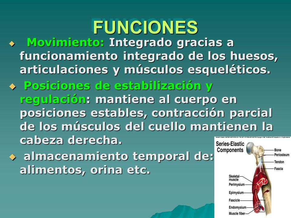 FUNCIONESFUNCIONES Movimiento: Integrado gracias a funcionamiento integrado de los huesos, articulaciones y músculos esqueléticos. Movimiento: Integra