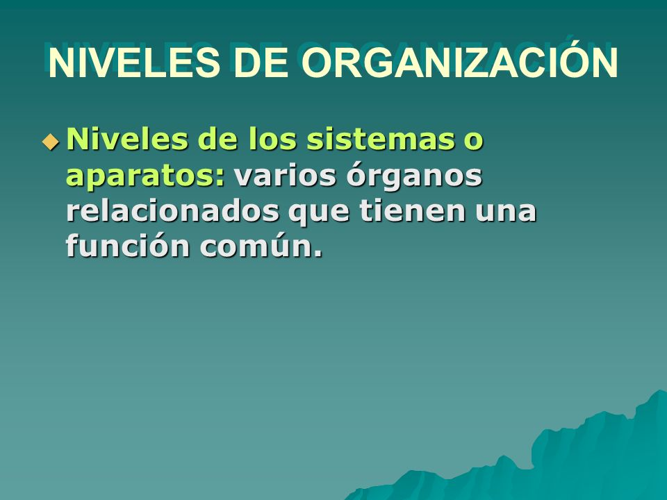 NIVELES DE ORGANIZACIÓN Niveles de los sistemas o aparatos: varios órganos relacionados que tienen una función común. Niveles de los sistemas o aparat