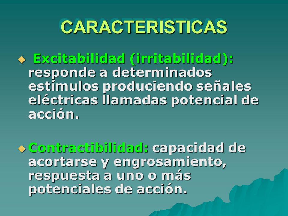 CARACTERISTICASCARACTERISTICAS Excitabilidad (irritabilidad): responde a determinados estímulos produciendo señales eléctricas llamadas potencial de a