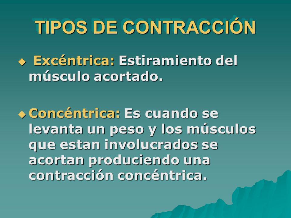 TIPOS DE CONTRACCIÓN Excéntrica: Estiramiento del músculo acortado. Excéntrica: Estiramiento del músculo acortado. Concéntrica: Es cuando se levanta u