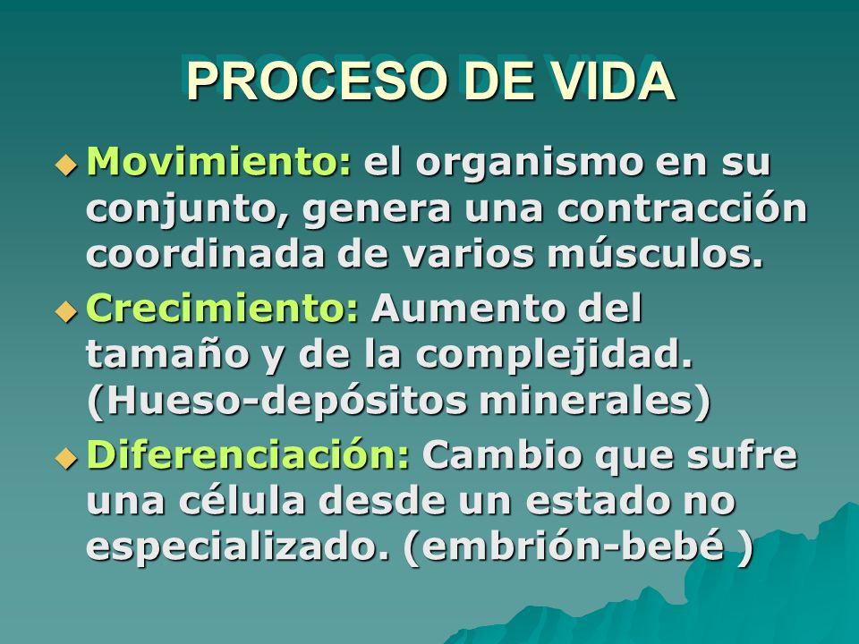 PROCESO DE VIDA Movimiento: el organismo en su conjunto, genera una contracción coordinada de varios músculos. Movimiento: el organismo en su conjunto